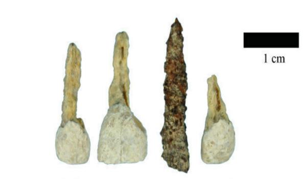 Chiếc răng giả làm bằng sắt được tìm thấy có niên đại 2.300 tuổi. Ảnh: HT