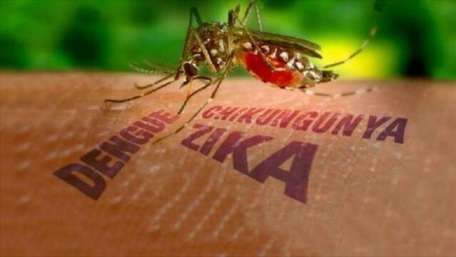 Ca nhiễm virus Zika đầu tiên trong năm