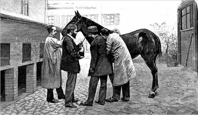 Ngựa -