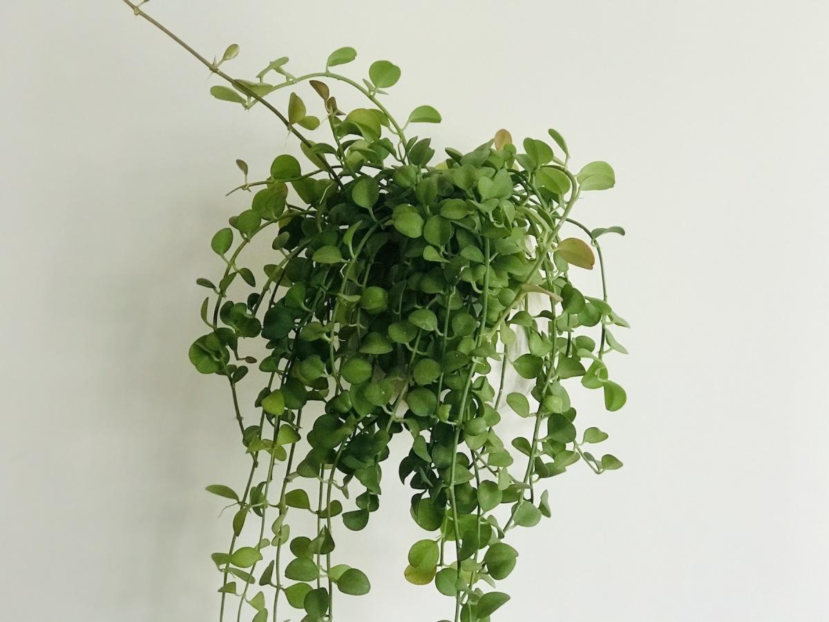 8 loại cây giúp thanh lọc không khí trong nhà