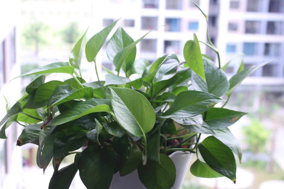 6 loại cây thanh lọc không khí phòng ngủ