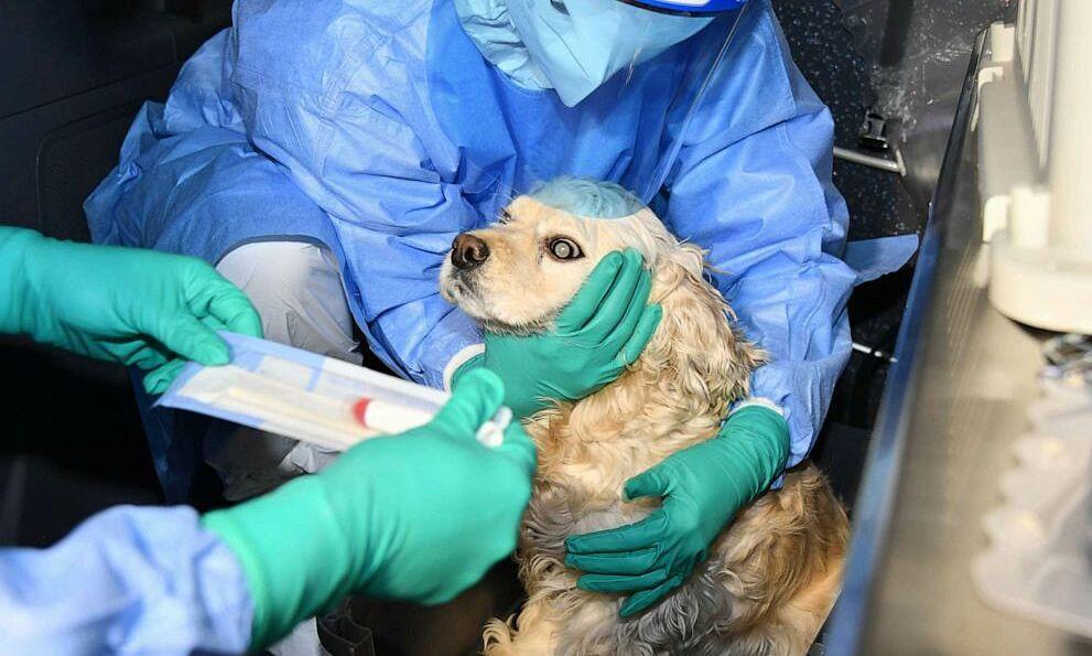 Biến thể nCoV có thể bắt nguồn từ chó