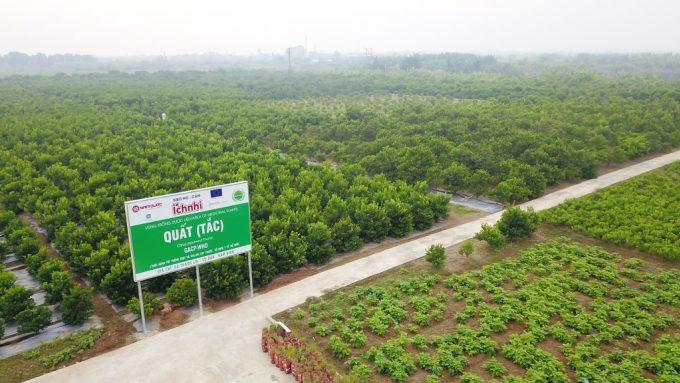 Vùng trồng quất (Vụ Bản - Nam Định) của Nam Dược đạt tiêu chuẩn GACP - WHO. Ảnh: Nam Dược .