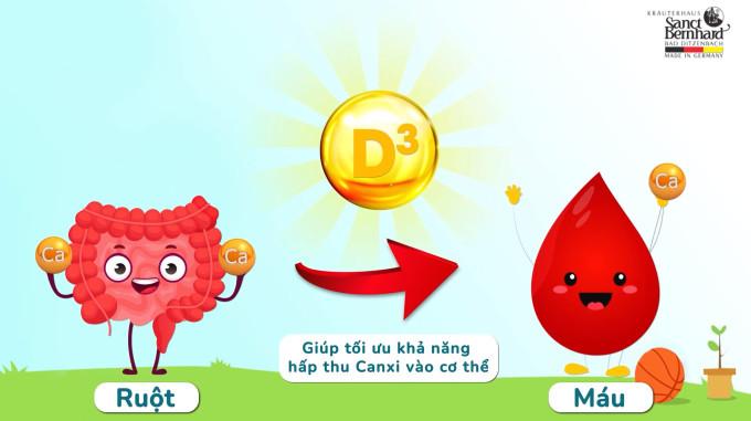 Vitamin D3 giúp hấp thu Canxi từ ruột vào máu.