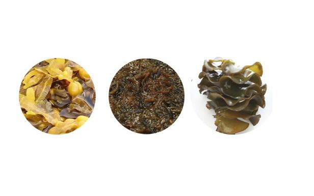 Các loại tảo biển nâu. Ảnh: Công ty TNHH thương mại Fucoidan Nhật Bản.
